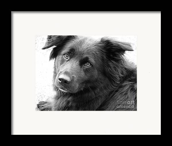 Dog Framed Print featuring the photograph Thinking by Amanda Barcon