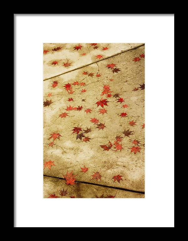 Leaves Framed Print featuring the photograph This Path by Rebecca Cozart