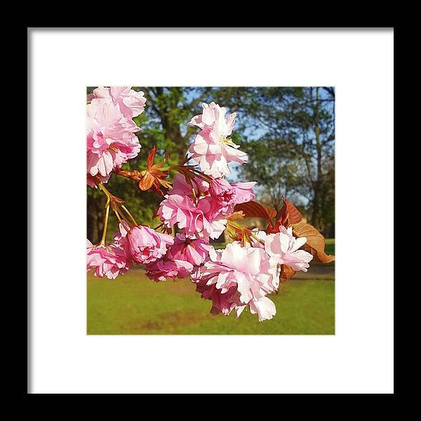 Spring Framed Print featuring the photograph This Sun Has Really Brought Out The by Dante Harker