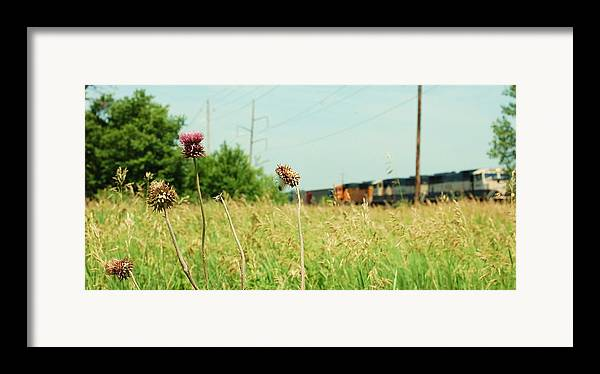 Photo Framed Print featuring the photograph Thistle Rail by Jame Hayes