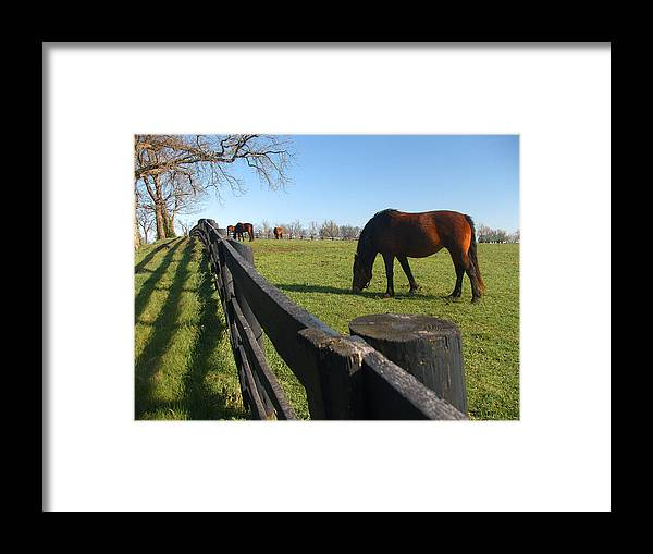Horse Framed Print featuring the photograph Thoroughbred Horses In Kentucky Pasture by Dave Chafin