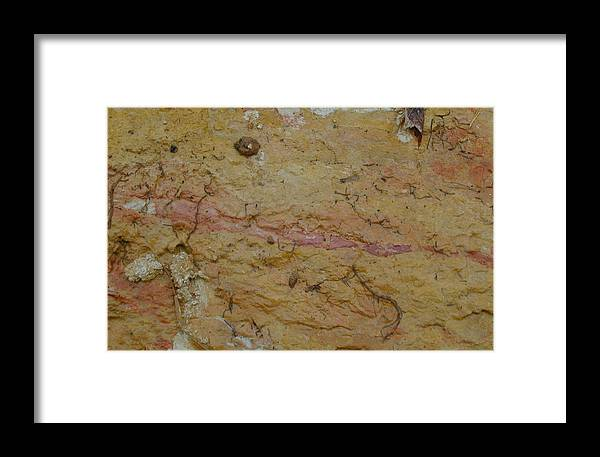 Threads Framed Print featuring the photograph Threads Of Life by Douglas Barnett