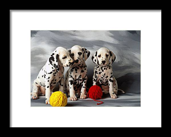 Dalmatian Puppies Three Puppy Dalmatians Pet Pets Animal Animals Dog Dogs Doggy Sit Sits Sitting Young Pedigree Canine Domestic Domesticated Purebred Purebreed Breed Gray Background Vertical Color Colour Colors Canines Calm Cute Hound Hounds Innocence Spot Spots Companionship Together Togetherness Framed Print featuring the photograph Three Dalmatian puppies by Garry Gay