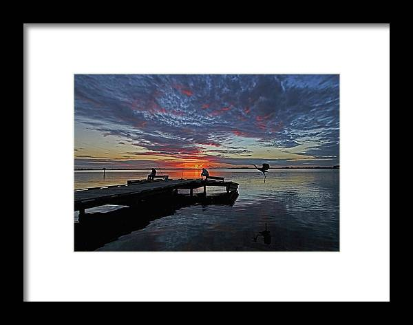 Hh Photography Of Florida Framed Print featuring the photograph Three For Dinner by HH Photography of Florida