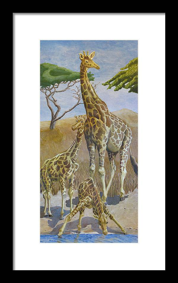 Giraffes Framed Print featuring the drawing Three Giraffes by Dominic White