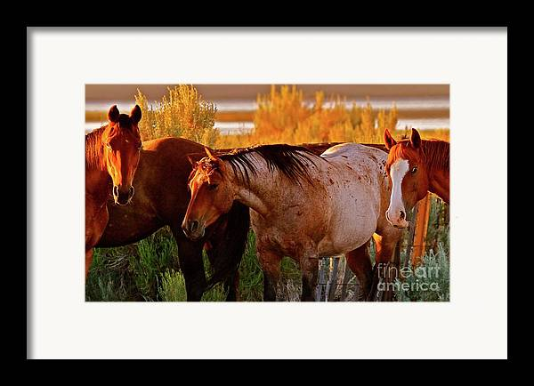 Horse Framed Print featuring the photograph Three Horses Of A Suspicious Corral by Gus McCrea