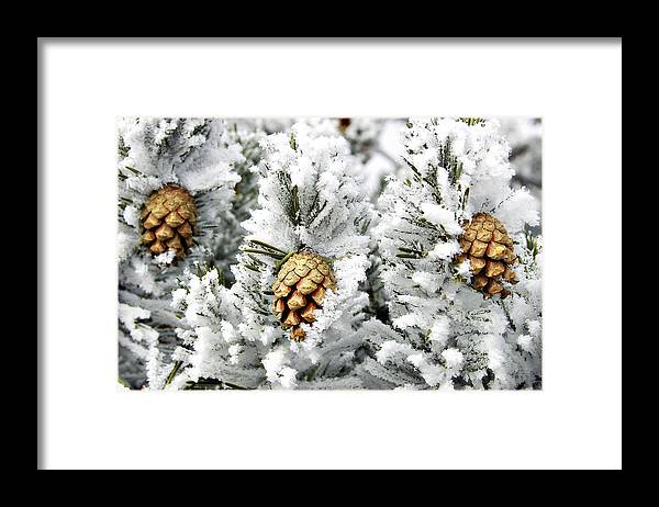 Frosty Framed Print featuring the photograph Three Pinecones by Marilyn Hunt