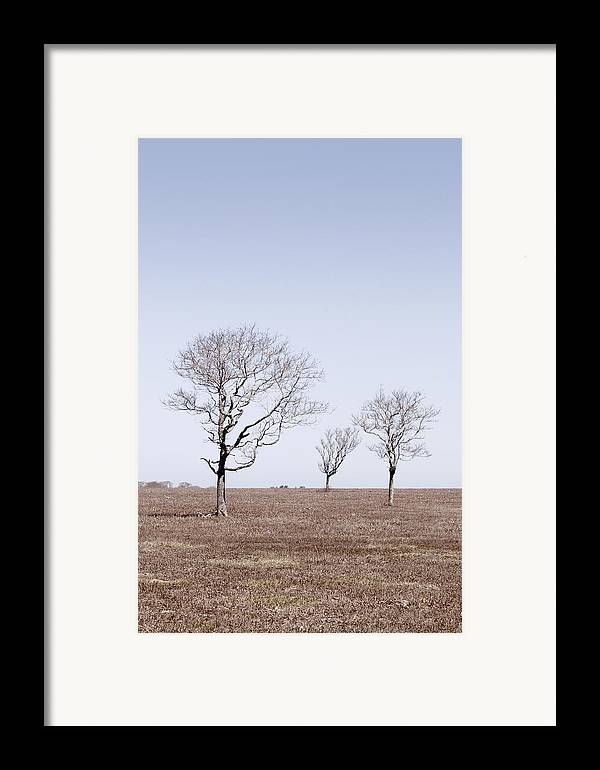Trees Framed Print featuring the photograph Three Trees - Nantucket by Henry Krauzyk