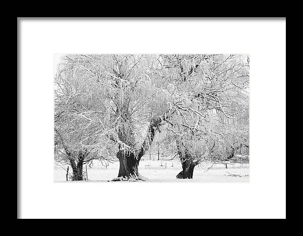 Black And White Framed Print featuring the photograph Three Trees In The Snow - Bw Fine Art Photography Print by James BO Insogna