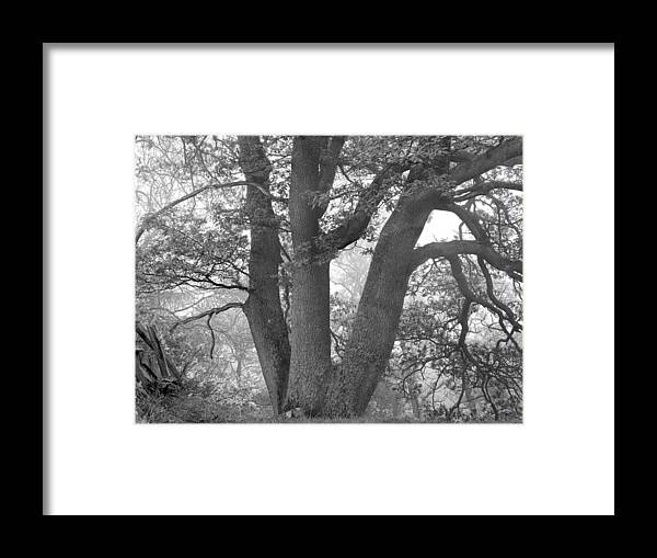 Framed Print featuring the photograph Three Trunk Tree, Whitley Mill by Iain Duncan