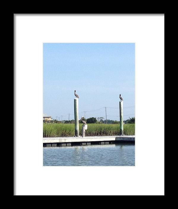 Birds Framed Print featuring the photograph Three Watchbirds by Kristine Nutt