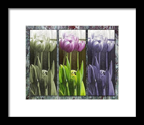 Tulips Framed Print featuring the photograph Threelips by Tom Romeo