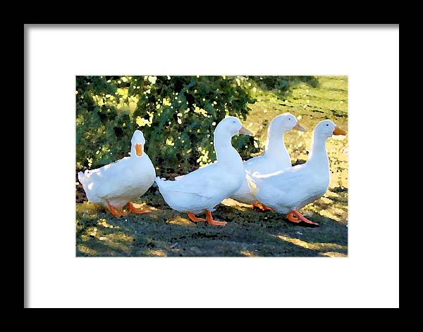 Duck Framed Print featuring the photograph Threes Company by Ellen Lerner ODonnell
