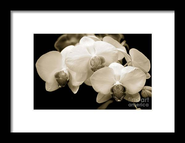 Beauty Flower Framed Print featuring the photograph Threesome by Son Of the Moon