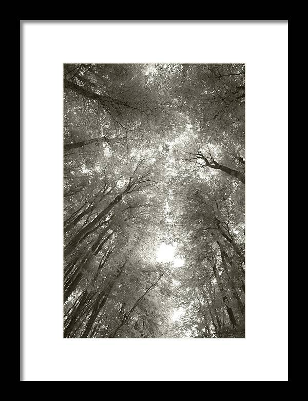 Forest Framed Print featuring the photograph Through The Forest 3 by Marjan Jankovic