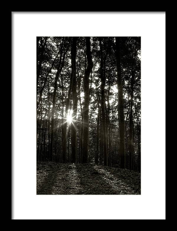 Forest Framed Print featuring the photograph Through The Forest 4 by Marjan Jankovic