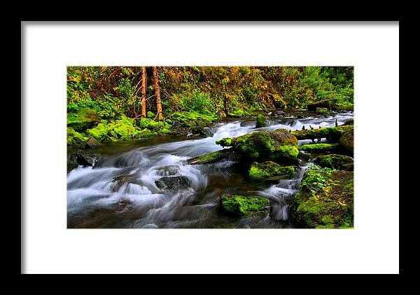 Colorado Framed Print featuring the photograph Through The Forest Floor It Flows by Bill Keiran