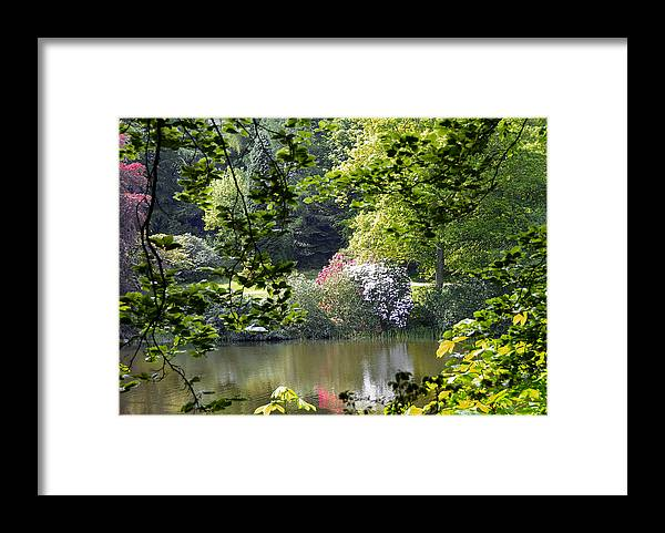 Countryside Framed Print featuring the photograph Through The Tree by Svetlana Sewell