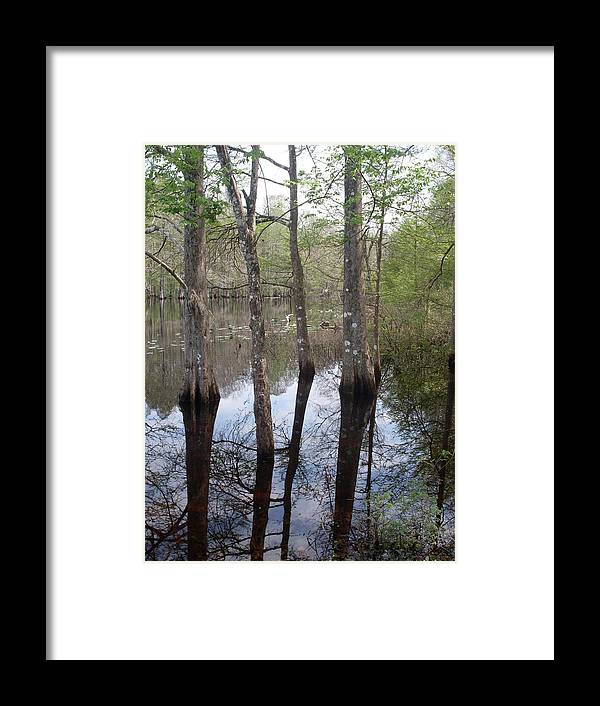 Trees Framed Print featuring the photograph Through The Trees And To The River by Warren Thompson