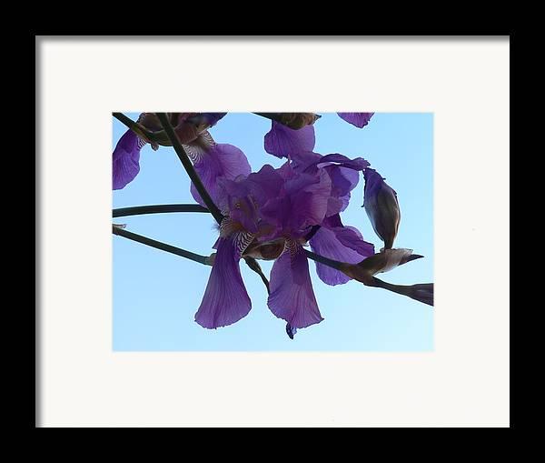 Iris Framed Print featuring the photograph Through Vincent's Eyes by Cynthia Ann Swan