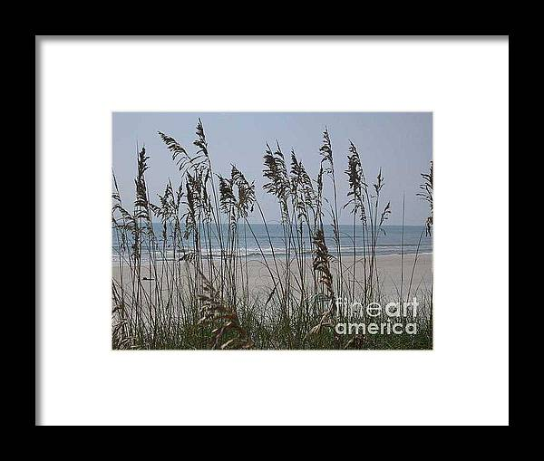 Florida Beach Near St. Augustine Framed Print featuring the photograph Thru The Sea Oats by Barb Montanye Meseroll