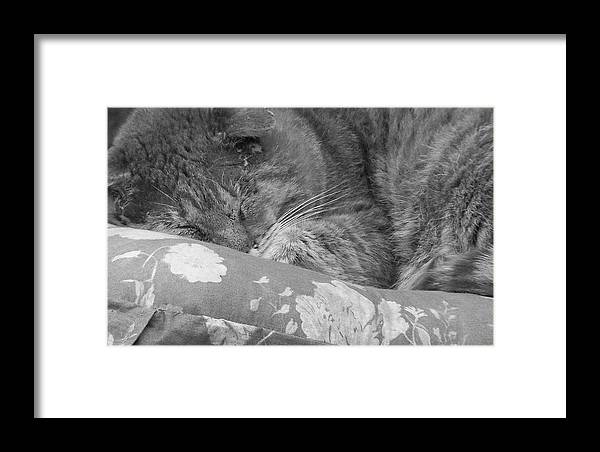Cat Framed Print featuring the photograph Thumbody Sleeping by Deborah Montana