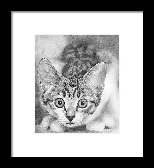Cat Framed Print featuring the drawing Tiddles by Karen Townsend
