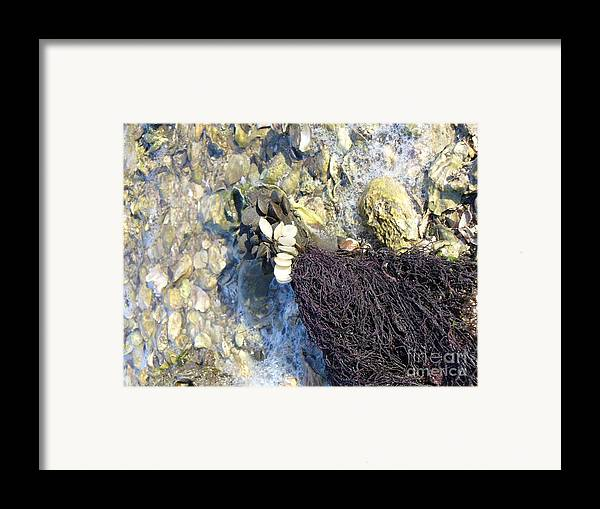 Ocean Framed Print featuring the photograph Tide Pool by Stephanie Richards