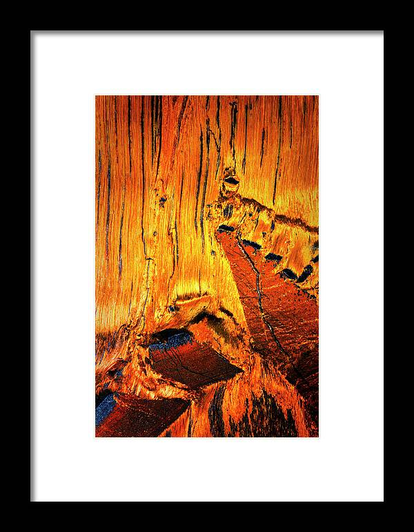 Macro Framed Print featuring the photograph Tiger Eye Macro by Robert Storost