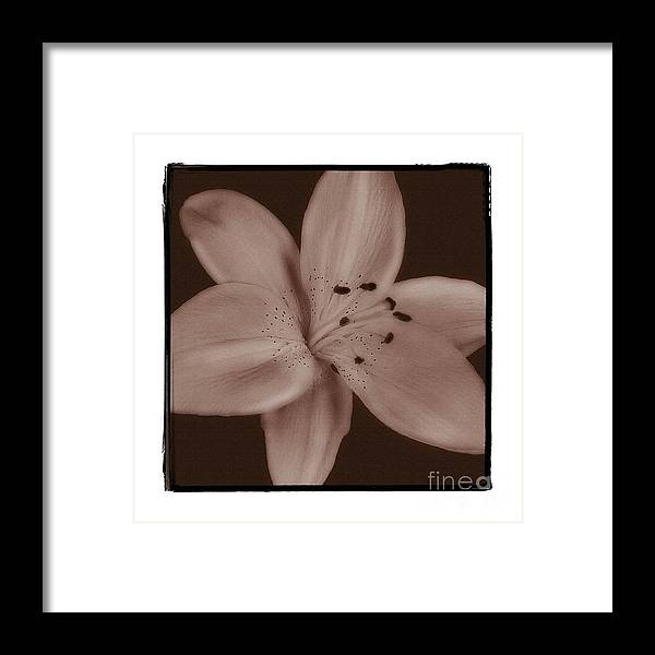 Lily Framed Print featuring the photograph Tiger Lily 8 by K Randall Wilcox