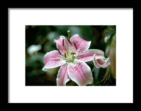 Flowers Framed Print featuring the photograph Tiger by Michael Morrison