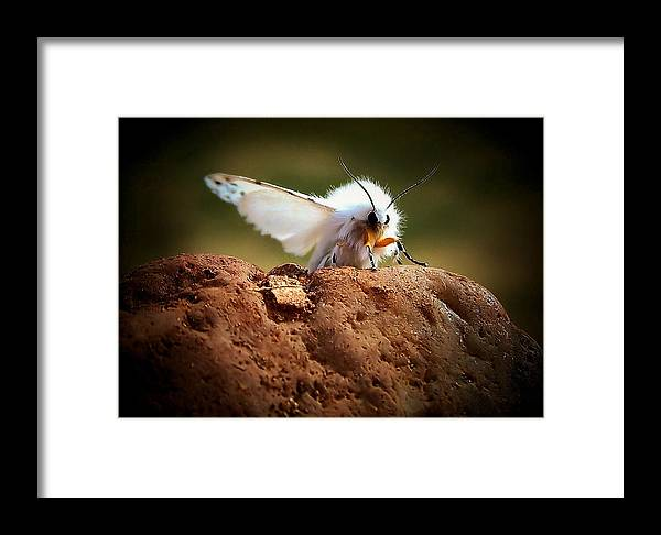 Moth Framed Print featuring the photograph Tiger Moth by Karen Scovill