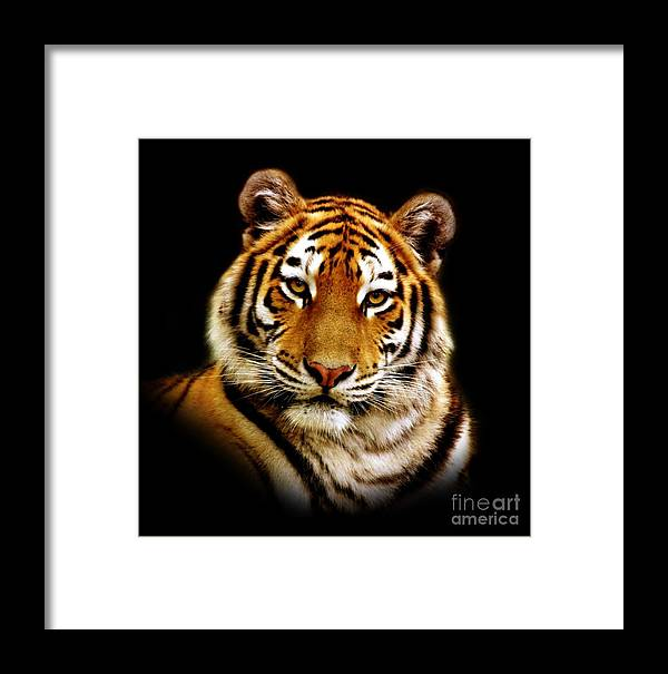 Wildlife Framed Print featuring the photograph Tiger by Jacky Gerritsen