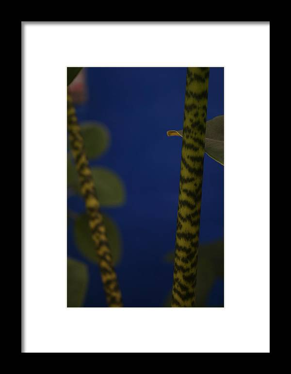 Botanical Framed Print featuring the photograph Tiger Plant I by Allan E Dooley Jr