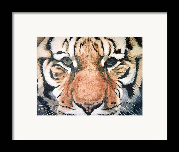 Tiger Framed Print featuring the painting Tiger by Steve Greco