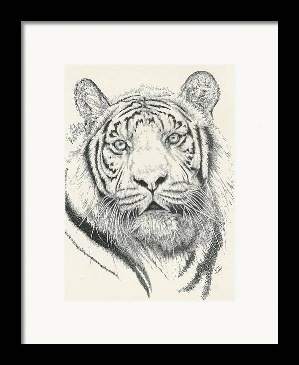 Tiger Framed Print featuring the drawing Tigerlily by Barbara Keith