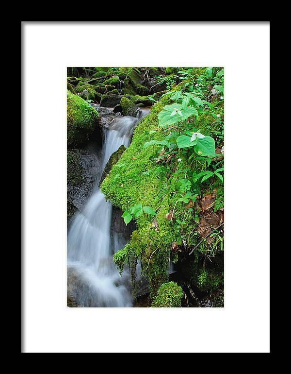 Trillium Framed Print featuring the photograph Tillium By Baxer Creek by Alan Lenk