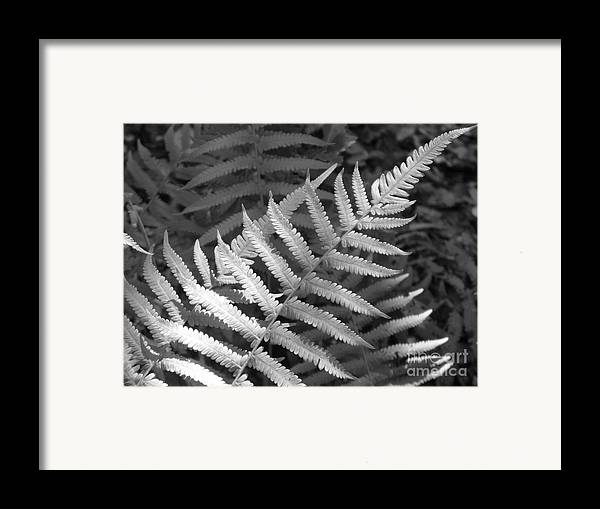 Black And White Framed Print featuring the photograph Tilted Fern by Stephanie Richards