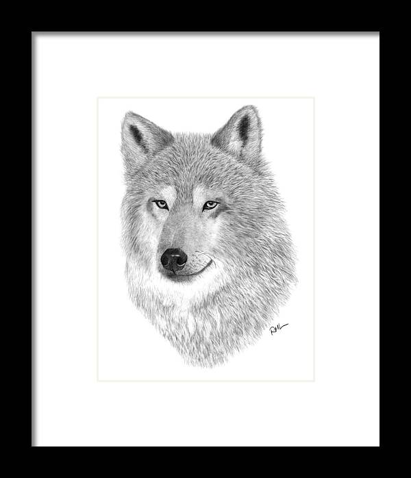 Wolf Drawing Framed Print featuring the drawing Timber Wolf by Rosanna Maria