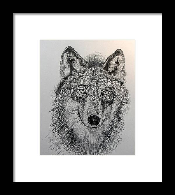 Original Drawing Framed Print featuring the drawing Timber Wolf by Stan Hamilton