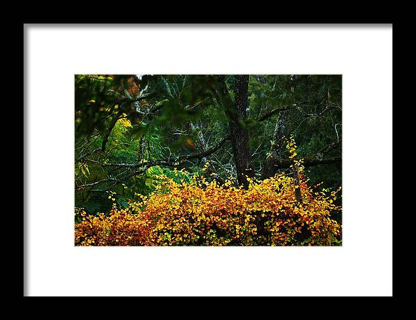 Grape Vine Framed Print featuring the photograph Time Of Change by Trudi Southerland