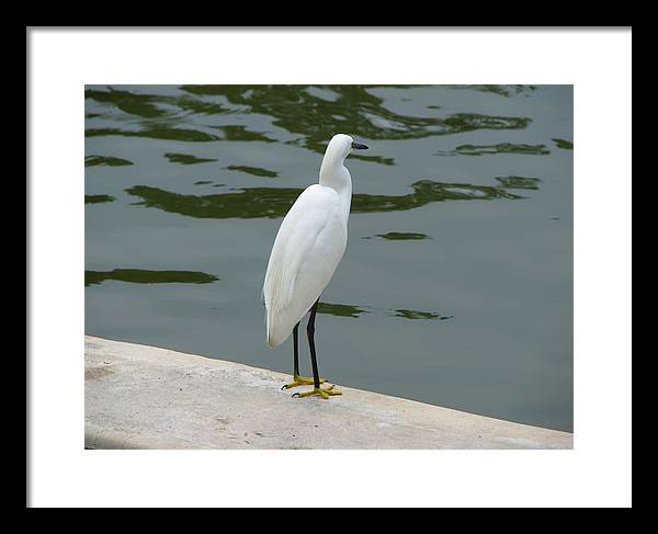 Bird Framed Print featuring the photograph Time Out by Thomas Kelly
