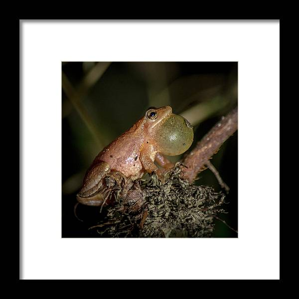 Toad Framed Print featuring the photograph Tiny Peeper by Andy Smetzer