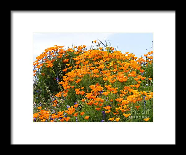 Poppy Framed Print featuring the photograph Tip Of Poppy Hill by Gail Salitui