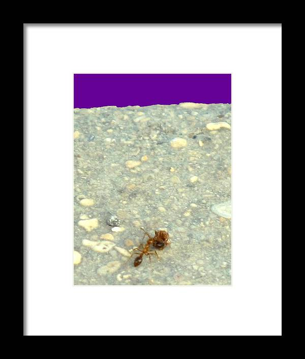 Ant Framed Print featuring the photograph To The Edge by Ian MacDonald