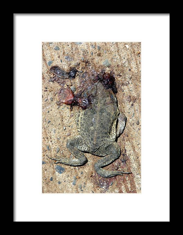 Photographer Framed Print featuring the photograph Toad Road 3 by Jez C Self