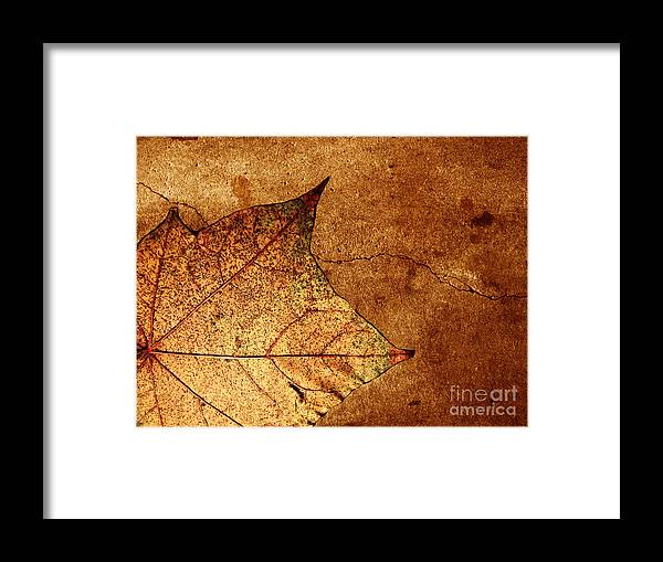 Autumn Framed Print featuring the photograph Today Everything Changes by Dana DiPasquale