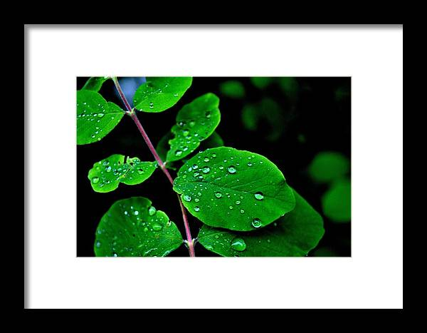 Leaves Framed Print featuring the photograph Todays Art 519 by Lawrence Hess