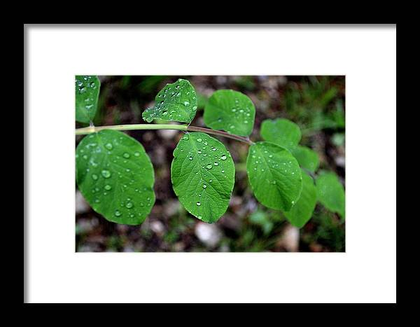 Leaves Framed Print featuring the photograph Todays Art 525 by Lawrence Hess