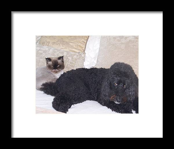 Animals Framed Print featuring the digital art Togetherness by George Pasini